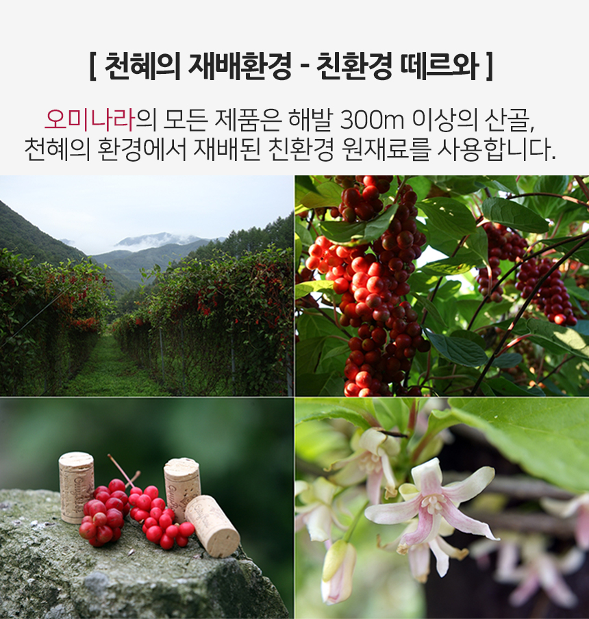 친환경오미자_재배환경